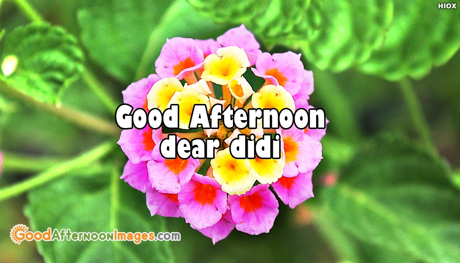 Good Afternoon Dear Didi - Good Afternoon Images for Didi