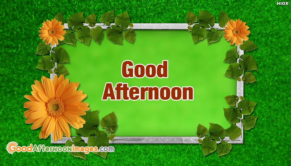 Floral Good Afternoon Images For Free Download