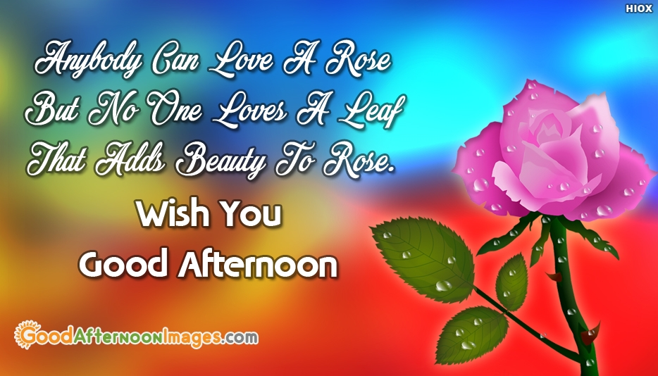 Good Afternoon Love SMS   Anybody Can Love A Rose But No One Loves A Leaf