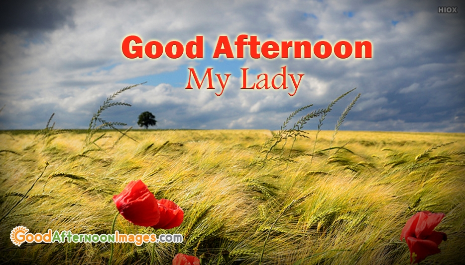 Good Afternoon My Lady - Good Afternoon Images for Wife