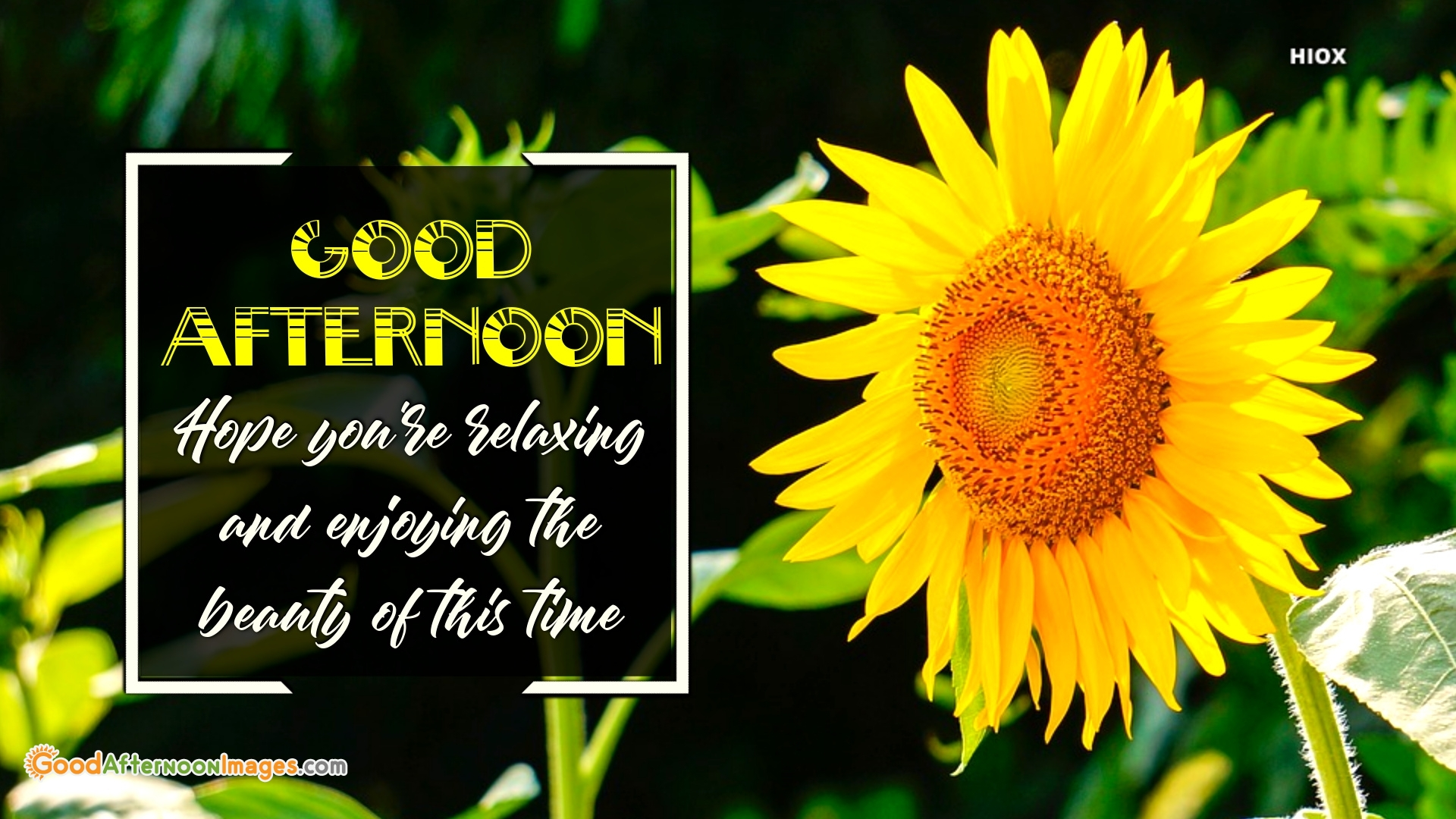 Good Afternoon Quotes Free Download