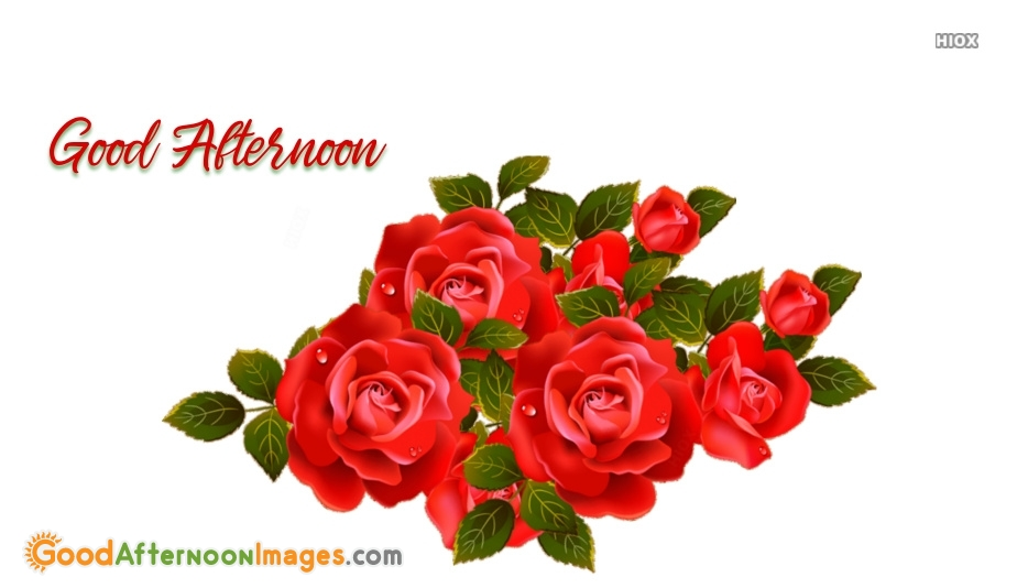 Good Afternoon Images With Rose