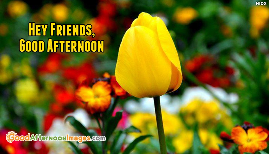 Good Afternoon Sms - Hey Friends, Good Afternoon