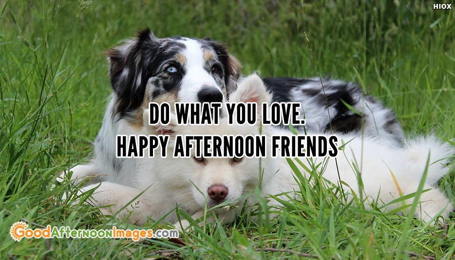 Good Afternoon Wishes For Friends - Do What You Love. Happy Afternoon Friends.