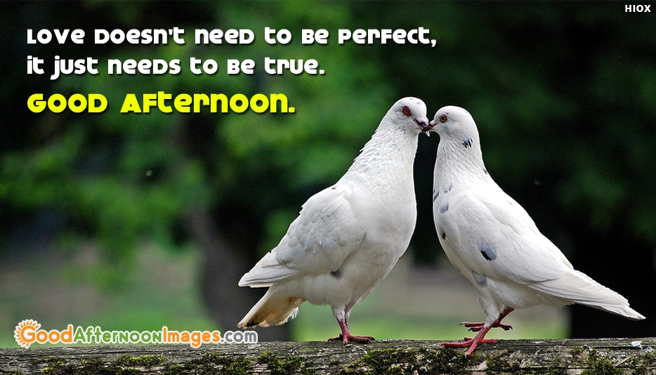 Good Afternoon Wishes To Couples   Love Doesnt Need To Be Perfect, It Just  Needs