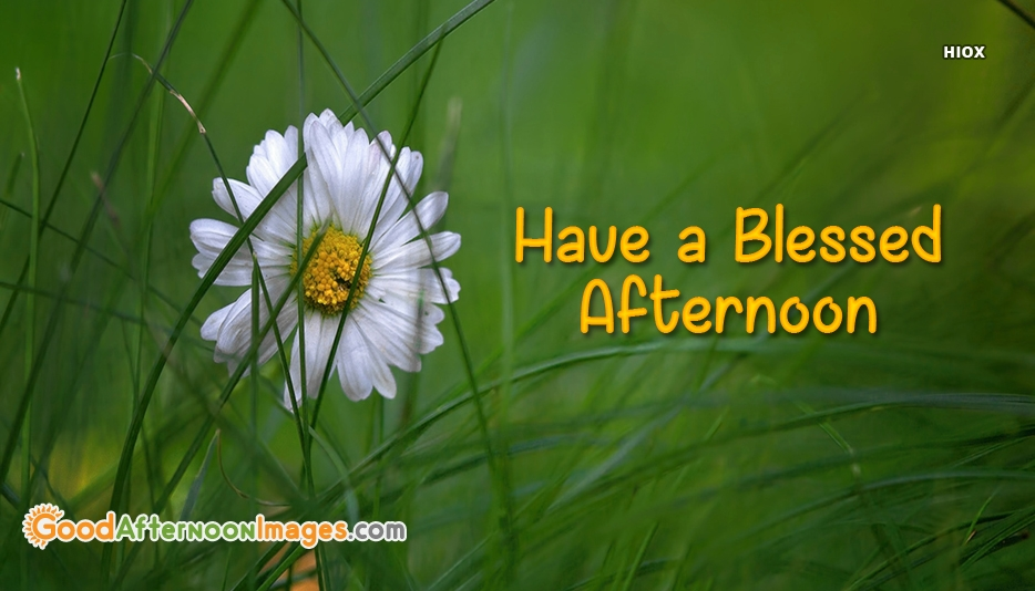 Have A Blessed Afternoon - Good Afternoon Images For Facebook
