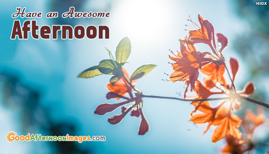Have An Awesome Afternoon - Good Afternoon Wallpaper Free Download