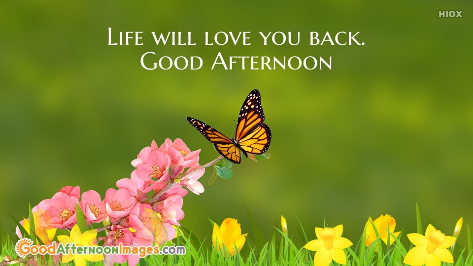 Life Will Love You Back. Good Afternoon
