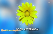 Good Afternoon Flower Images