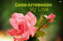 Good Afternoon Love Rose